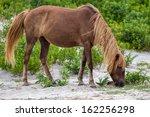 A Wild Pony  Horse  Of...