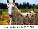 Portrait Of Horse Wild In...