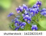 Gentle Wildflowers Violets...