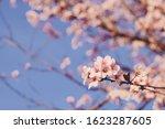 Beautiful Flowering Branch Wit...