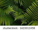 Natural Ferns Pattern....