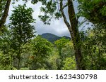 Mossman River And Lookout In...