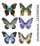 butterfly on white | Shutterstock . vector #162348566