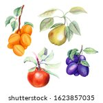Set Of Fruits  Apricot  Pear ...