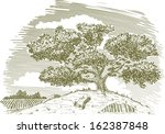 pen and ink drawing of a tree... | Shutterstock .eps vector #162387848