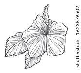 hibiscus flower  rose mallow... | Shutterstock .eps vector #1623879502