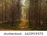 Spring Dark Coniferous Forest...