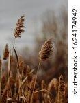 Pampas Grass Landscape Winter...