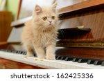 Stock photo fluffy persian kitten walking on the piano 162425336