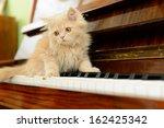 Fluffy Persian Kitten Walking...