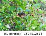 Cute Chipmunk On Tree Branch