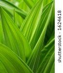 spring leaves | Shutterstock . vector #1624618