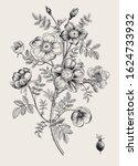rose hip. wild rose. botanical... | Shutterstock .eps vector #1624733932
