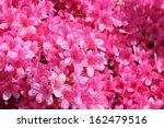 Pink Flower Azalea Rhododendro...
