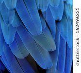 Closeup Of Blue And Gold Macaw...