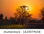 Sunset Tree. Beautiful Orange...