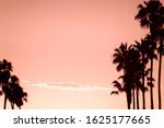 Palm Trees And Pink Sky...