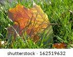 autumn leaf on green grass ... | Shutterstock . vector #162519632