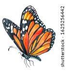 Monarch Butterfly Watercolor...