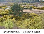 Open Heathland  With Woodland...