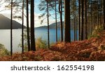 Trees And Fern During Autumn In ...