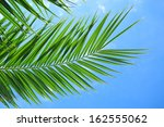 Green Palm Leaves Over Blue Sk...