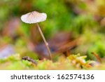 Small mushroom with a wet cap in green moss during autumn or fall - stock photo
