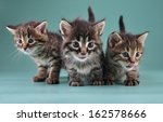 Stock photo group of three little kittens together studio shot 162578666