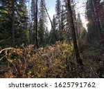 Marvelous Summer Forest On A...