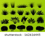 exotic jungle bushes grass ... | Shutterstock .eps vector #162616445