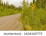 A Moose Warning Sign Along The...