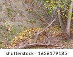 Autumn Trees Near The Slope....
