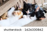 Group Of Kittens Playing In The ...