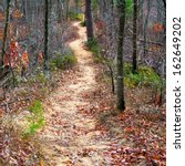 Path in autumn mountain forest - stock photo