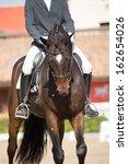beautiful spanish horse color... | Shutterstock . vector #162654026