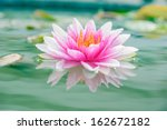 A Beautiful Pink Waterlily Or...