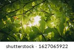 Small photo of Beautiful leaves of a fertile tree, we must look after it