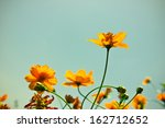 vintage yellow flowers. | Shutterstock . vector #162712652