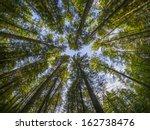 crown trees | Shutterstock . vector #162738476