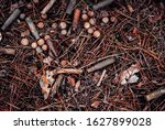 Small photo of Old cartridges and buckshot. In the forest.