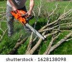Man Cutting Tree Limbs With...