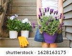 Girl Holding Lavender Pot At...