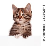 Stock photo cute kitten with blank billboard isolated on white background 162842945