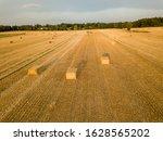 Golden Haystacks On A Cornfield ...