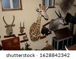 big game hunting, hunting trophies - stock photo