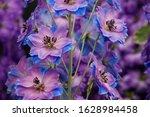 Purple Blue Delphinium Flowers...