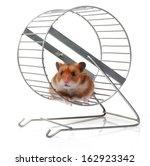 Stock photo hamster in a wheel 162923342
