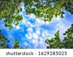 Green Trees And Clouds In The...