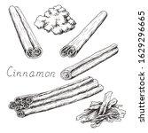 natural cinnamon stick. winter... | Shutterstock .eps vector #1629296665