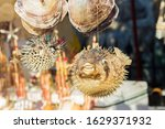 Small photo of Blowfish, balloonfish, globefish in puff up shape as defense mechanism when threatened. Souvenirs at the street market near Bodrum castle (also known as St Peter Castle), Mugla. Close Up, Soft focus